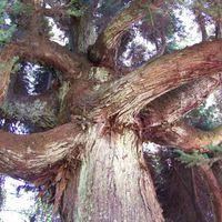 Madeira - fák