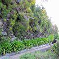 Madeira - levada, most már tényleg (x)