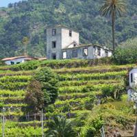 Madeira - teraszok
