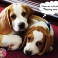Nem lehet őket semmiért sem hibáztatni :)