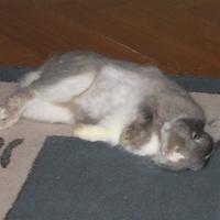 Alvó és/vagy téli állat: kinyúlt nyúl