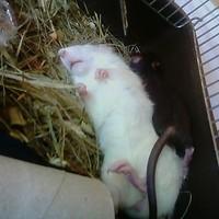 Emil, a lecsószerű kislány szétterpesztett lábbal alszik