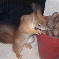 Misi mókus lebukott
