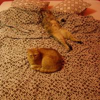 Süti és Frenki ágyneműtesztelést vállal, rövid határidővel