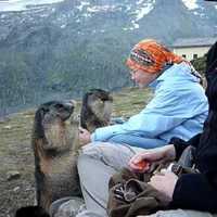 Így kell mormotát etetni