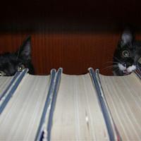 Tudományos macskák