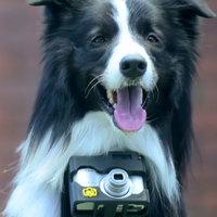 A világ első fotós kutyája