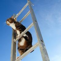 Létrára mászik a macska, hogy vicces legyen