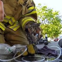 Tűzoltók mentették ki a kiscicát
