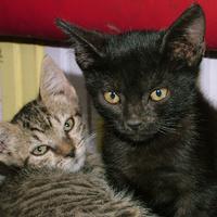Vizes állat pályázat - Macskák nyerték a harmadik pólót!