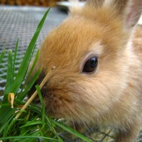 Legcukibb húsvéti nyúl verseny: fű-sommelier