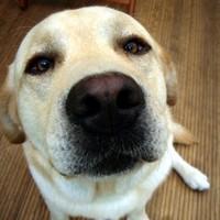 Közeli kutyaorr tényleg cuki