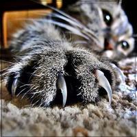 Macskusz kiereszti...
