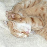 Répa, a budai talált cica