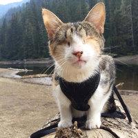 Egy vak cica, aki imád kirándulni!