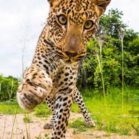 A Serengeti Nemzeti Park csodái