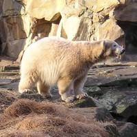 Így nézett ki Knut január végén