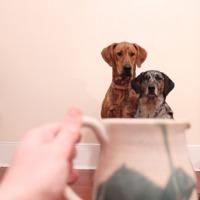 Kutyák bögrében