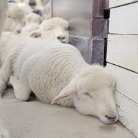 Mindenkinek szüksége van a pihenésre