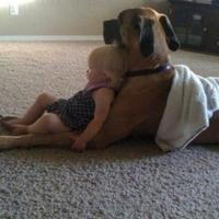Kutyák, akik bármit megtesznek gazdijukért