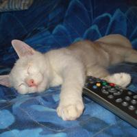 Távirányítós macska kikapcsolva