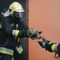 Tűzoltók mentették meg a nyulakat