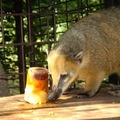 Hűsölnek az állatkerti lakók is