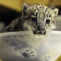 Hópárduc bébi született egy amerikai állatkertben