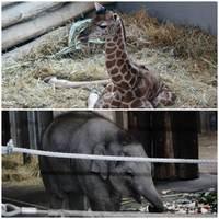 Dupla ünnep az Állatkertben