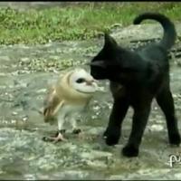 Bagoly a macska legjobb barátja