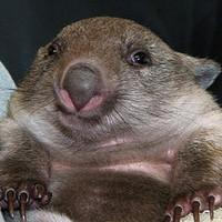 Jody, a bébivombat szeret pihenni