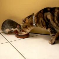 Tom és Jerry az életben