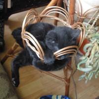 Alvó és/vagy téli állat: virágtartóba préselődött a macska
