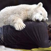 Knut lábat zsákmányolt