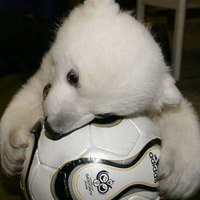 Cute Knut