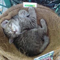 A kertész macskája