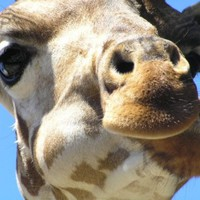 Vásároljon karácsonyra kedvezményes állatkerti bérletet!