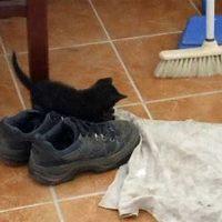 Kleo harca a cipővel
