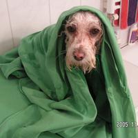 Csak nem hagytok békén a fürdéssel?