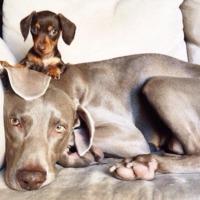 Egyik kutya, másik eb