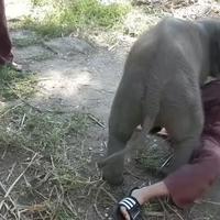 Az elefántbébi ölelése