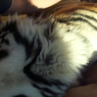 Cica az ágyban