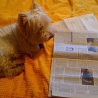 Programok kutyáknak vakáció idejére