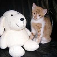 Nyinyi, a kis vörös cica