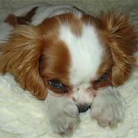 Pupi, a legcukibb puppy