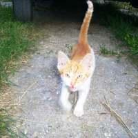 Vörös cica esete a fűnyíróval
