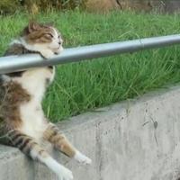 Macska relax