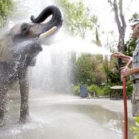 Hűsölő állatok Kaliforniában