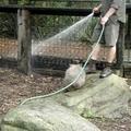Dagi wombat játszani akar