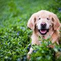 Smiley, a vak terápiás kutya